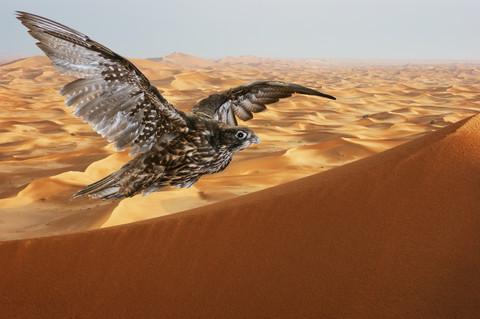 arabische Falken