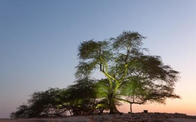 """Der """"Baum des Lebens"""", mitten in der Wüste"""